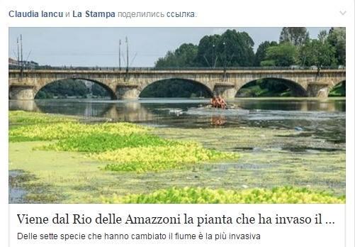Реку По в Турине захватил сорняк из Амазонки
