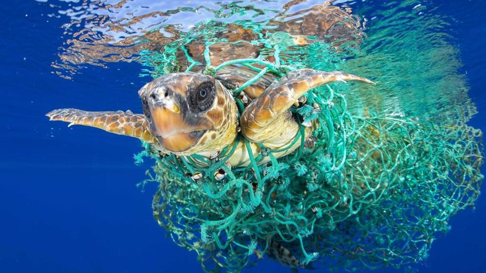 Турин выставка пластик против природы Турин Италия