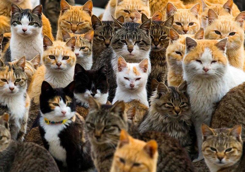 Выставка кошек в Турине 2017