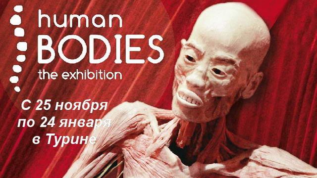Тайны человеческого тела