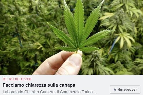 Италия имеет давнюю традицию в выращивании конопли Турин в октябре 2018 года