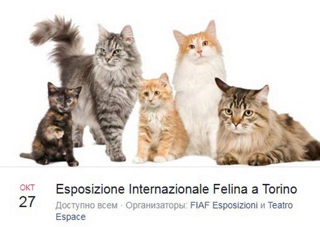 Выставка кошек в Турине