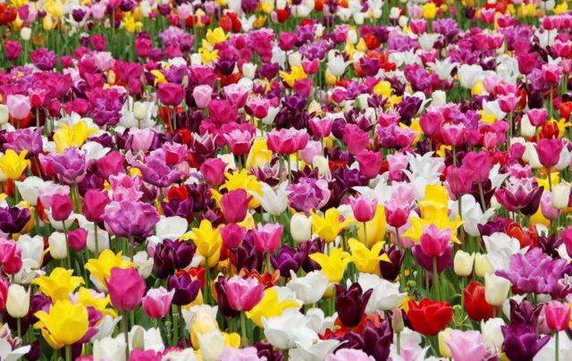 Весенние фестивали цветов в Италии мероприятия цветов в Турине
