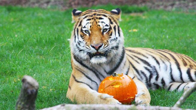 Биопарк ZOOM Турин празднуют Хэллоуин