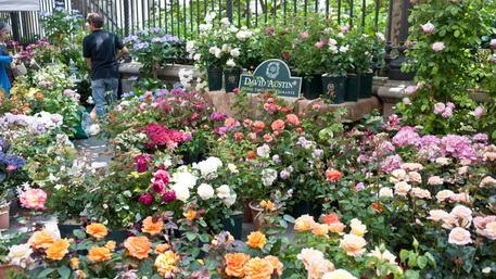 Цветочный фестиваль Flor отвоевывает центр Турина, выходные с 80 питомниками