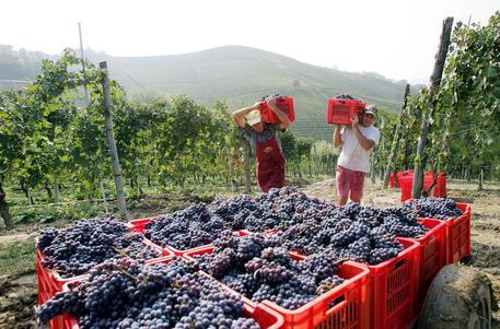Упали продажи вина в Италии
