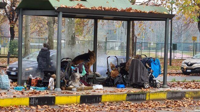 В Турине расчищена трамвайная остановка, на которой бездомная женщина жила 2 года с 5 собаками