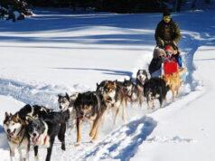 Катание на собачьих упряжках в Пьемонте Турин