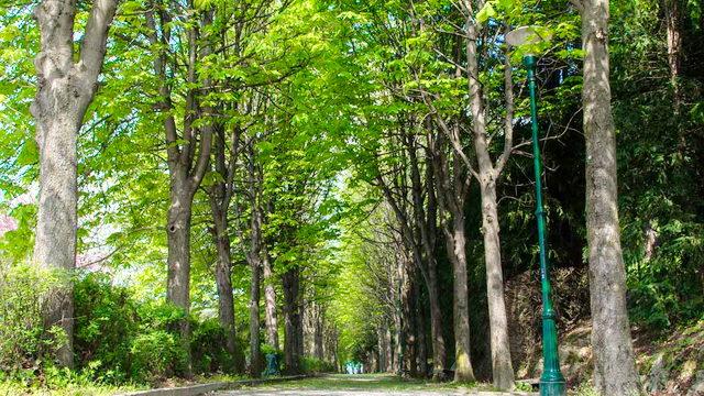 Лес в парке на Вилле Королевы Часовня сатанистов в Турине