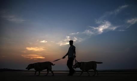 Dog sitter становится профессией, Пьемонте утвердил закон